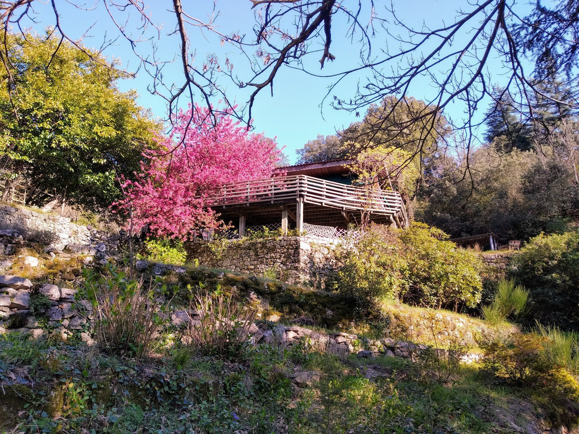 NaturoVida 30 - Chambres d'hôtes Pura Vida en face du Mont Aigoual à Valleraugue - Cévennes Gard