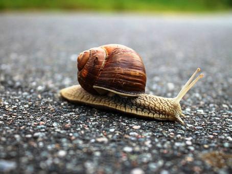 Slow is beautiful