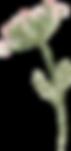 plants_0026_27.png