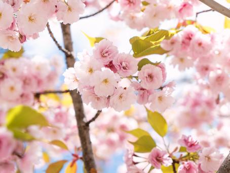 いよいよスタート!春に英語を始めようキャンペーン!