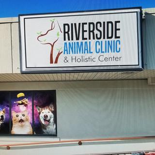 Animal Hospital Logo and window Graphics- Sticker Dude
