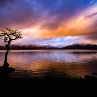 The Lonely Tree, Milarrochy Bay