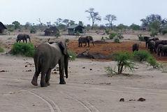elephant sands.jpg