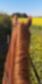 Heste.png
