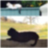 Saggy Cat.jpg