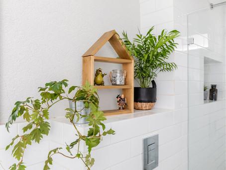 טיפול בצמחי בית