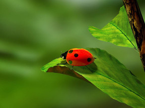 Ladybugs are magical