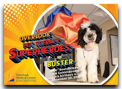 @buster_b_doodle therapy dog