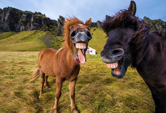 I tell good jokes ;)