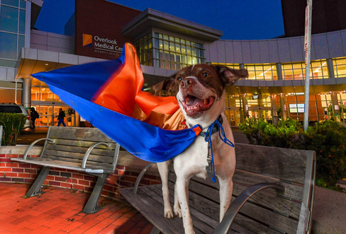Pet Therapy Superheroes