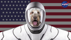 WINNIES BIG SpaceX ADVENTURE .m4v