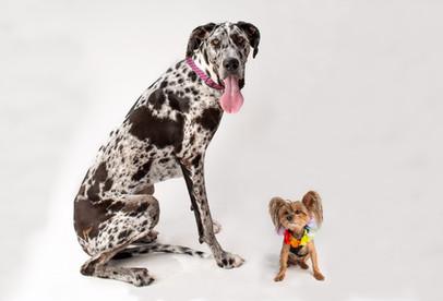 pepper & buddy