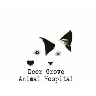 veterinarian in palatine, il