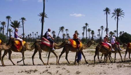 Tours - Marrakesh