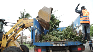 DPWH tree cutting helps power coops