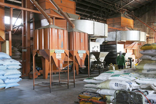 IN CAMARINES SUR: Palay trading booms during Covid-19