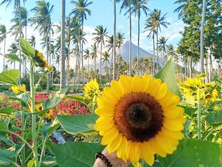 Gulayan sa Barangay: Albay's emerging farm tourism spot