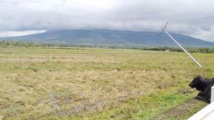 """SA AGRICULTURA: P38.4-M winalat na danyos ni """"Quinta"""""""