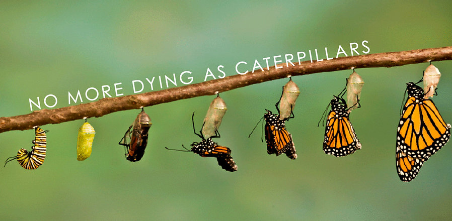 nomoredyingascaterpillars_edited.jpg