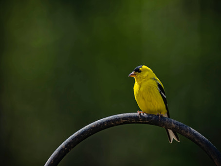 3 Reasons YOU Need a Canary