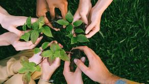 Ativismo Ambiental - o poder do coletivo na construção de um meio mais sustentável