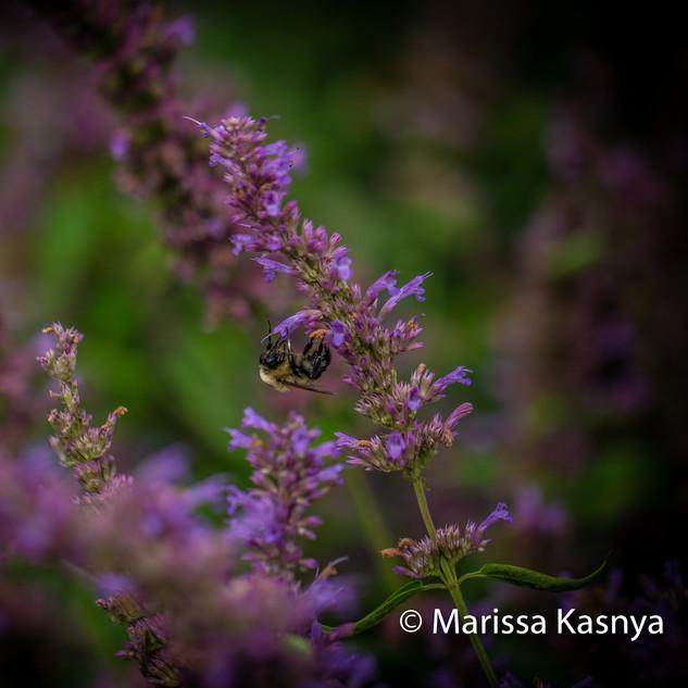bee macro photograph