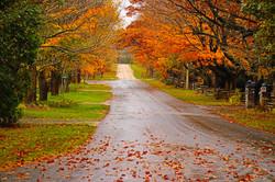 Fall scene - MK Video Photo