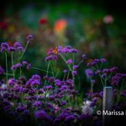 Butterlfy on flowers