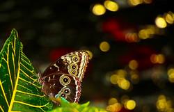 Butterfly - MK Video Photo