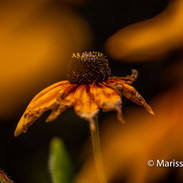 Yellow flower in fall photograph