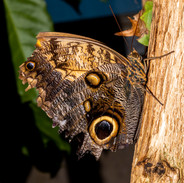 Butterfly on log