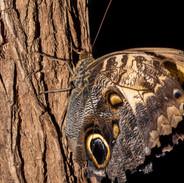 Butterfly closeup photograph