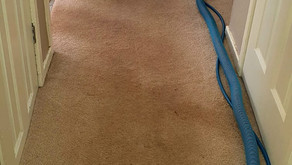Carpet Cleaning Photos