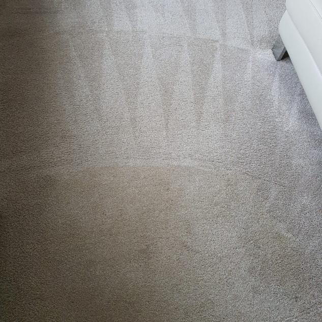 Carpet cleaner motherwell