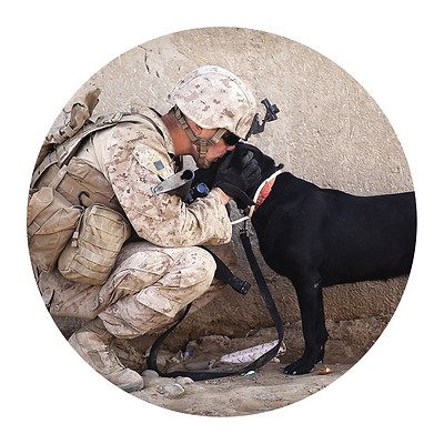 Service Animal and Soldier.png
