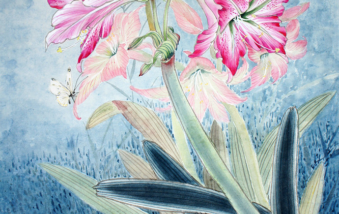 amaryllis with a butterfly.jpg