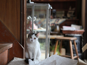 山形・米沢の民陶窯元を訪ねて