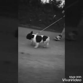 video-1531607971.mp4