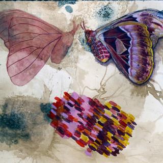 Illustration of an atlas moth