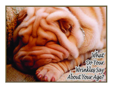 Wrinklesfront.jpeg