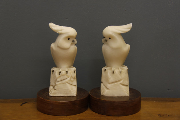 Two alabaster cockatoo's