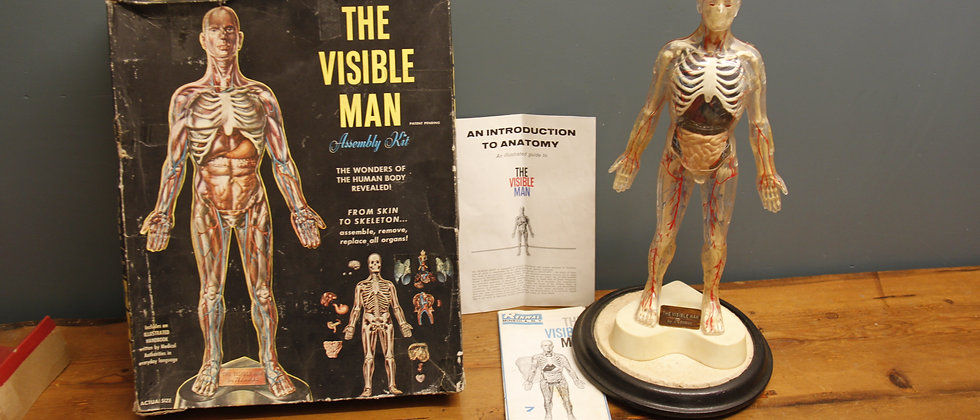 The Visible Man. Possibly late 1950's. Including glass dome and base.