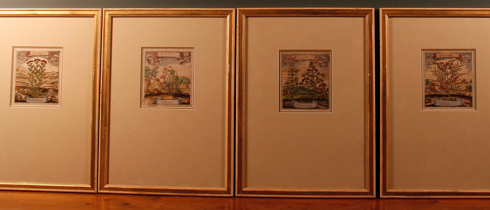 Original Ludwig Botanical studies framed, can be bought separately