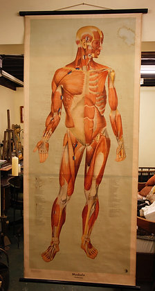 German Anatomical Poster