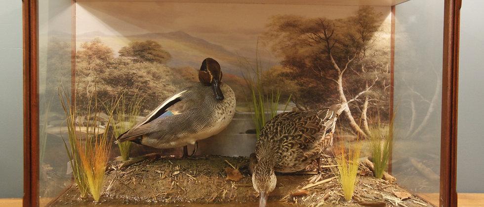 Mahogany lazed Case with Eurasian Teal Ducks