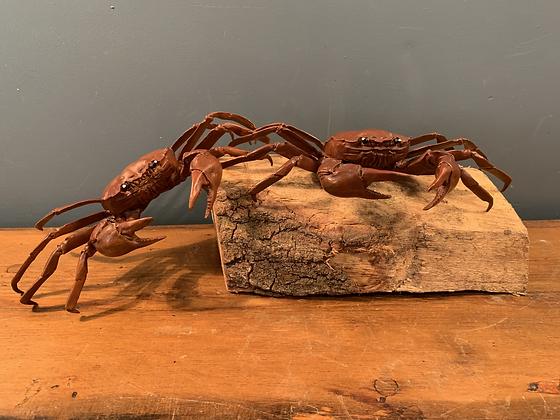 A Pair of Copper Crabs!