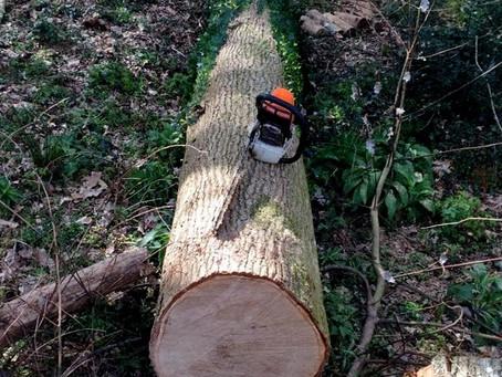 Une fois coupé, que fait-on du bois ?