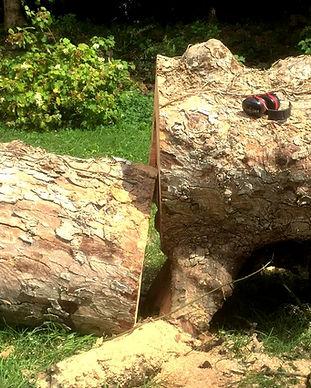 abattage-arbres-finistere_edited.jpg