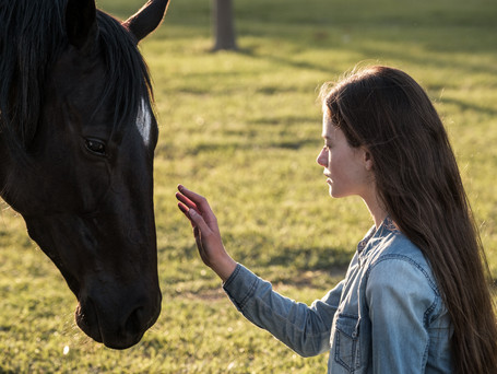 """KATE WINSLET VOICE THE HORSE OF """"BLACK BEAUTY"""", COMING SOON TO DISNEY+"""