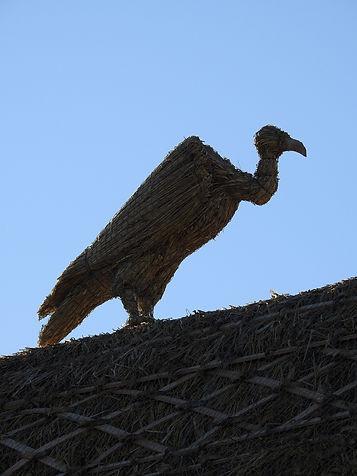 straw_vulture.jpg